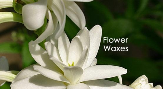 Making Flower Waxes