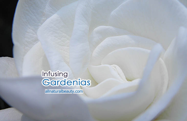 Infusing Fresh Gardenias