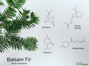Firs profile and hydrosol all natural beauty balsam fir chemistry ccuart Gallery