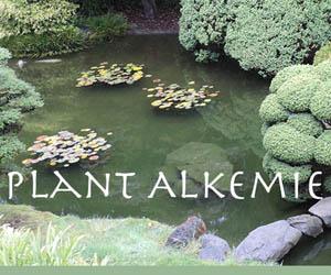 Plant Alkemie