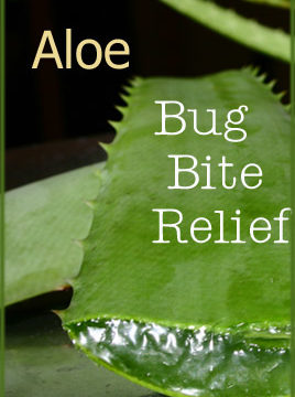 Natural Help for Bug Bites