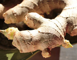 Ginger Skin Cream Recipe