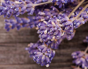 Lavender Powder Beauty Recipe