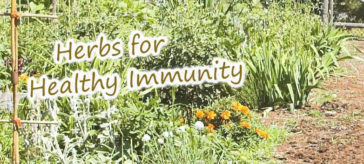 Herbs for Healthy Immunity