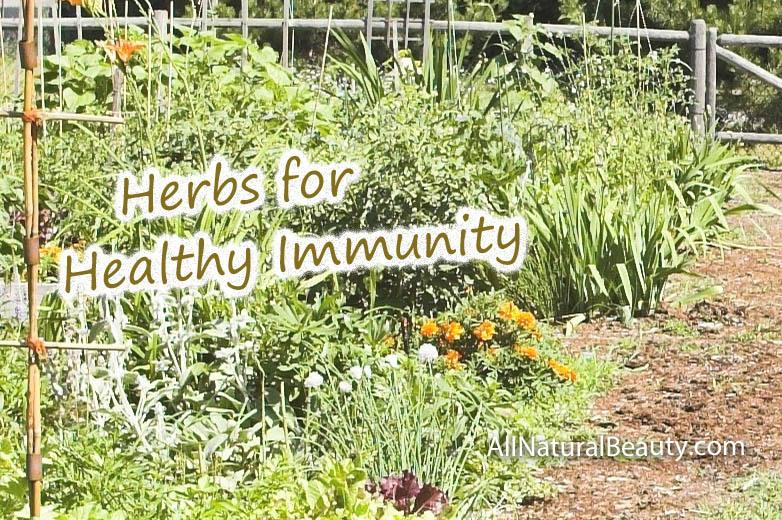 Herbs for Healthy Immunity