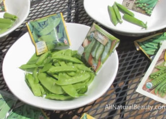 How to Grow Organic Peas